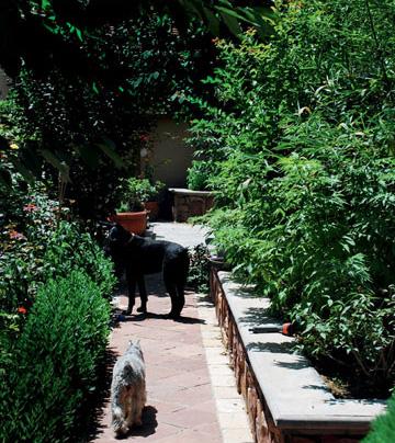 宠物/这里的院子既漂亮,又足够大狗小狗们跑步、跳跃、晒太阳,过着...